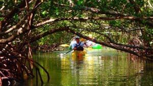Kayak guide leading a tour through the mangrove tunnels at Ted Sperling Park in Lido Key Florida